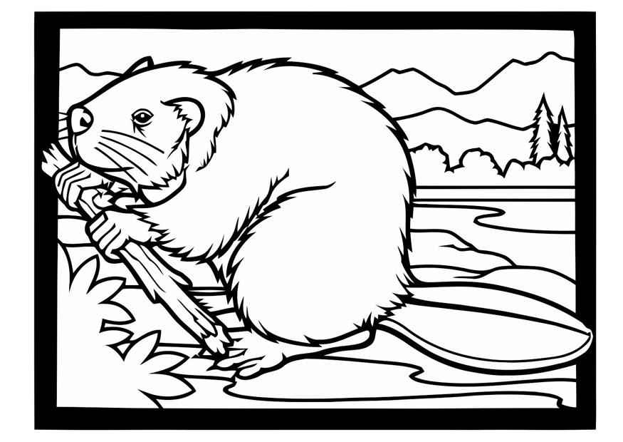 Dibujo para colorear castor con rama - Img 19401