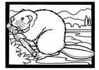 Dibujo para colorear castor con rama