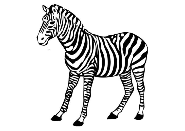 Dibujo Para Colorear Cebra Img 17394 Images
