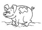 Dibujo para colorear Cerdos