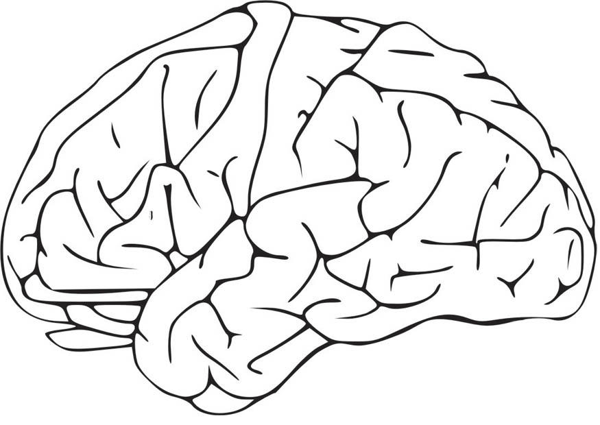 Dibujo para colorear Cerebro - Img 16581