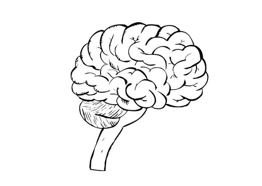 Dibujo para colorear Cerebro - Img 9487
