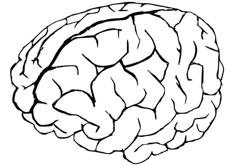 Dibujo para colorear cerebro - Img 22945