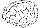 Dibujo para colorear cerebro