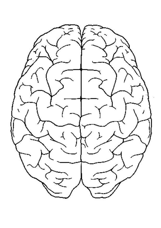 dibujo para colorear cerebro visto desde arriba