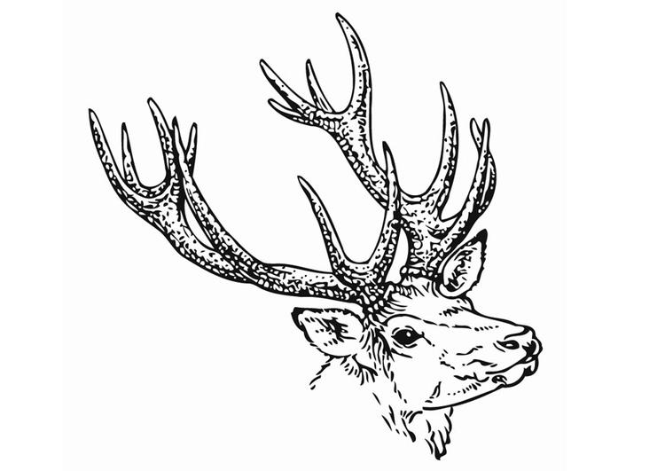 Dibujo para colorear Ciervo - Img 12904