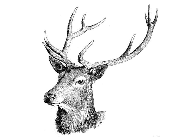 Dibujo para colorear Ciervo - Img 9757