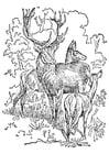 Dibujo para colorear ciervo y cierva