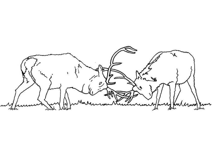 Dibujos De Ciervos Para Colorear E Imprimir: Dibujo Para Colorear Ciervos Luchando
