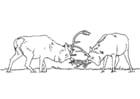Dibujo para colorear Ciervos luchando