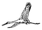 Dibujo para colorear cigüeña