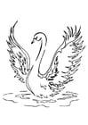 Dibujo para colorear cisne