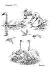 Dibujo para colorear Cisnes