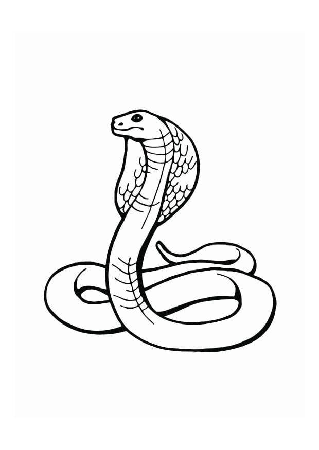 Worksheet. Dibujo para colorear Cobra  Img 12539