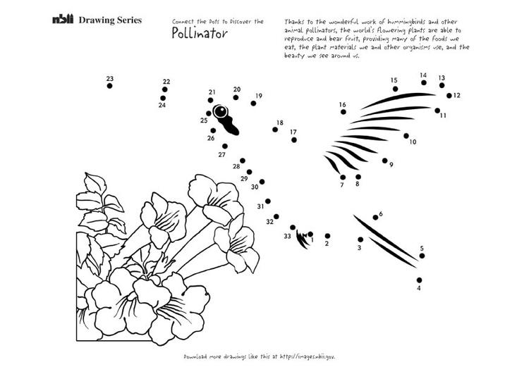 Dibujo Para Colorear Colibrã Img 20898 Images