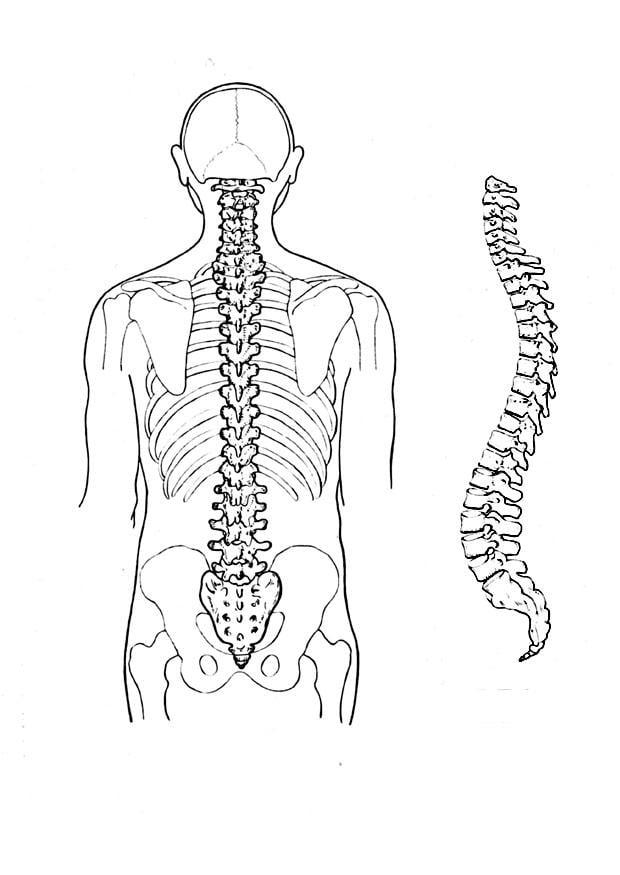 dibujo para colorear columna vertebral