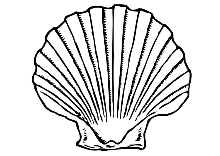 Dibujo para colorear concha - Img 19619