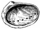 Dibujo para colorear concha - oreja de mar