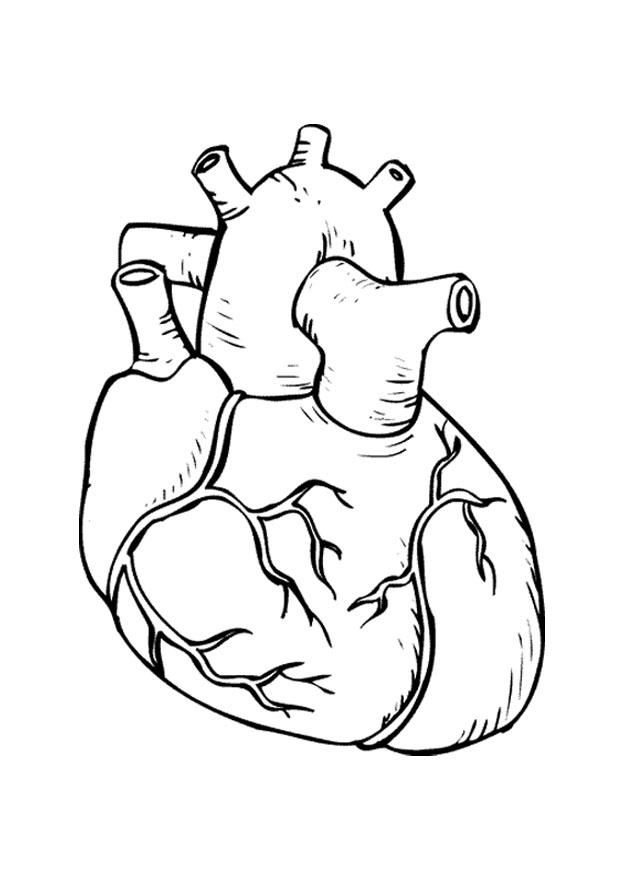 Dibujo para colorear Corazón - Img 9486