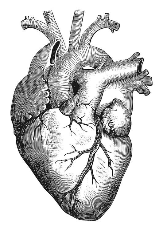 Dibujo para colorear corazón - Img 27911