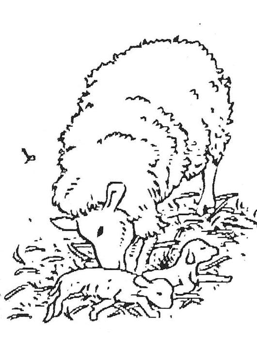 Dibujo para colorear Cordero recién nacido - Img 3738