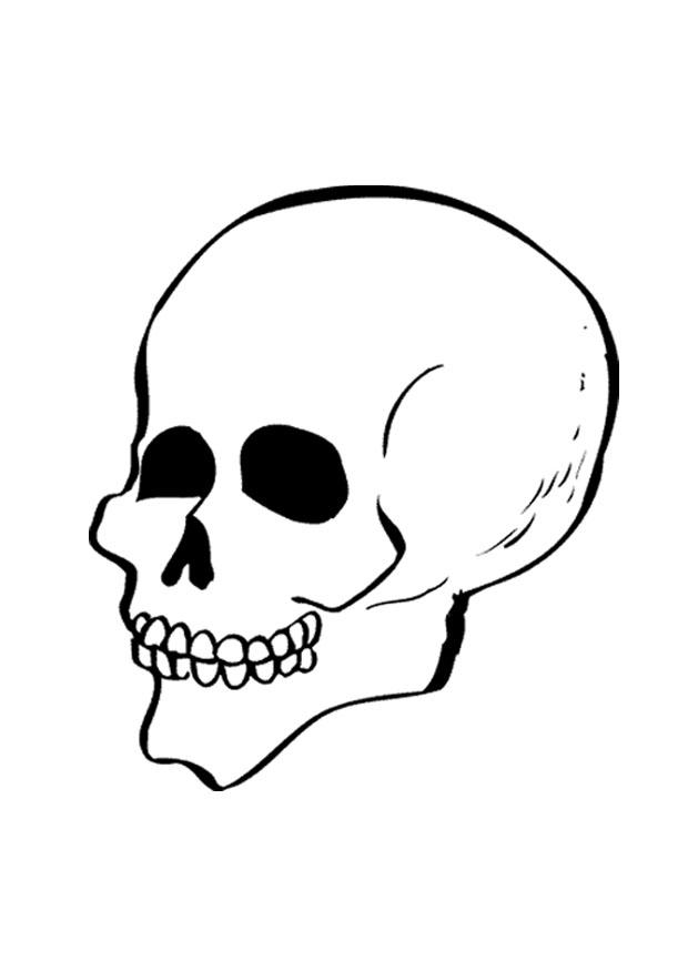 Dorable Página Para Colorear Cráneo Molde - Dibujos Para Colorear En ...