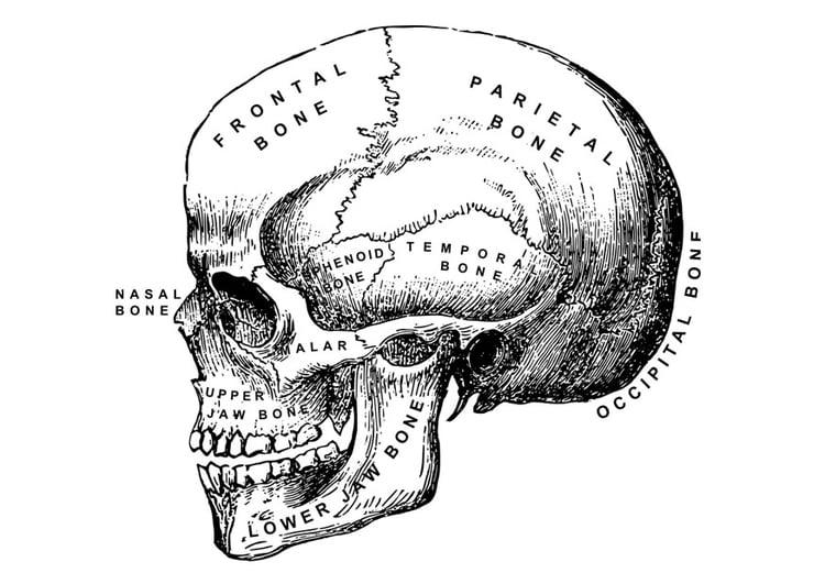 Dibujo para colorear cráneo - Img 27876