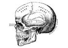 Dibujo para colorear cráneo