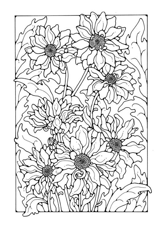 Dibujo para colorear crisantemo - Img 27750