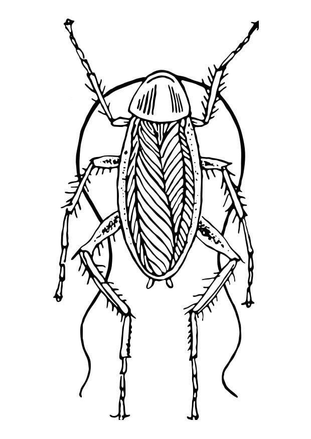 Dibujo para colorear cucaracha img 18569 images - Dessin de cafard ...