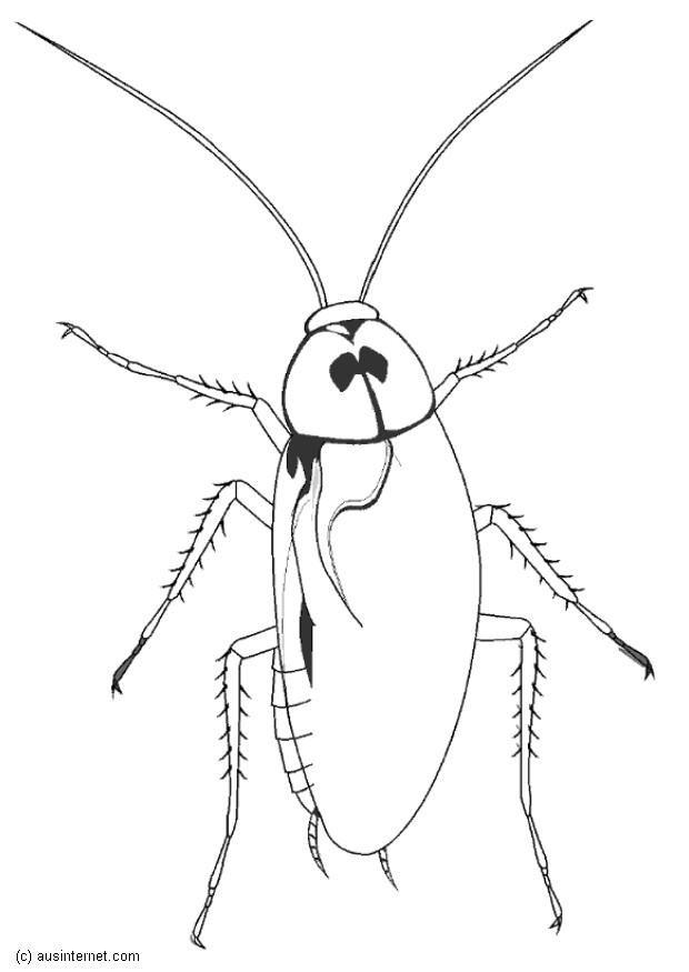 cockroach coloring page - dibujo para colorear cucaracha img 5600
