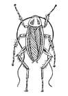 Dibujo para colorear cucaracha