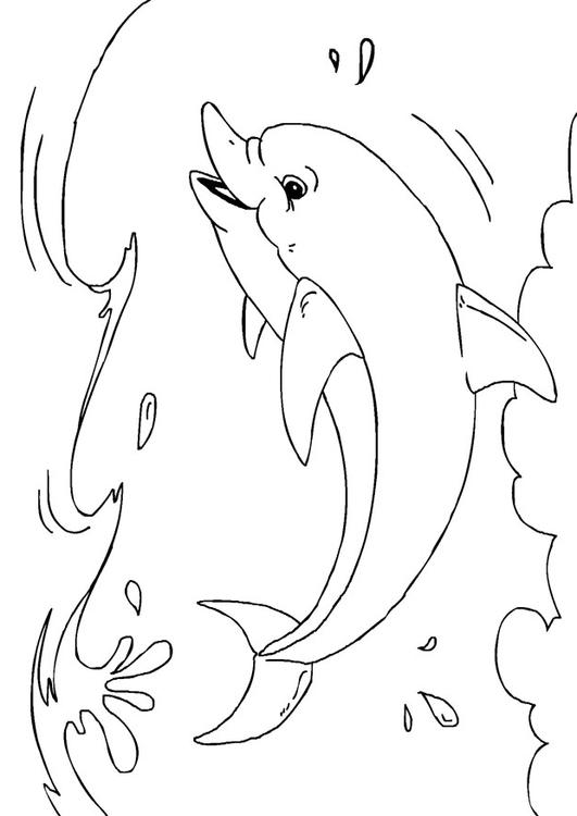 Dibujo para colorear delfn  Img 27233