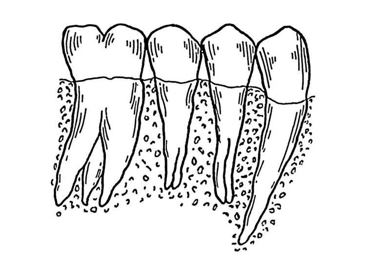 Dibujo para colorear dientes - Img 18755