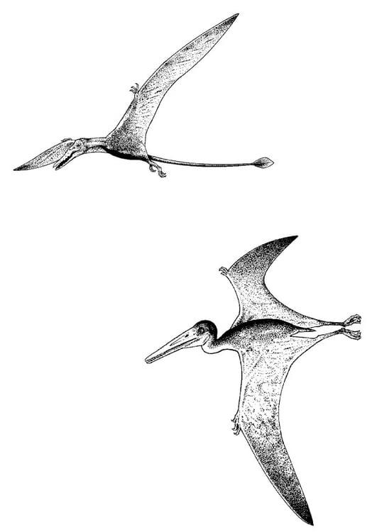 Dibujo Para Colorear Dinosaurios Voladores Img 9107