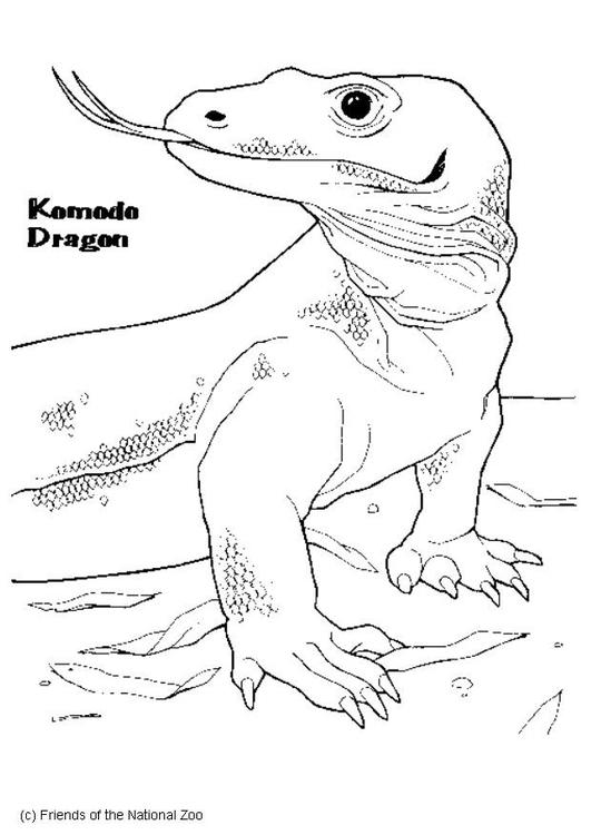 Magnífico Dragón De Komodo Para Colorear Colección de Imágenes ...