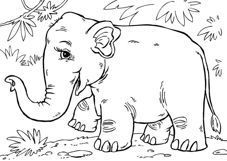 Dibujo Para Colorear Elefante Asiático Img 27854