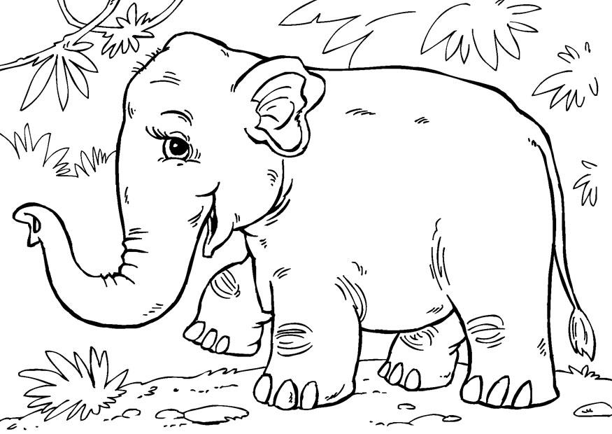 Dibujo Para Colorear Elefante Asiatico Dibujos Para Imprimir Gratis