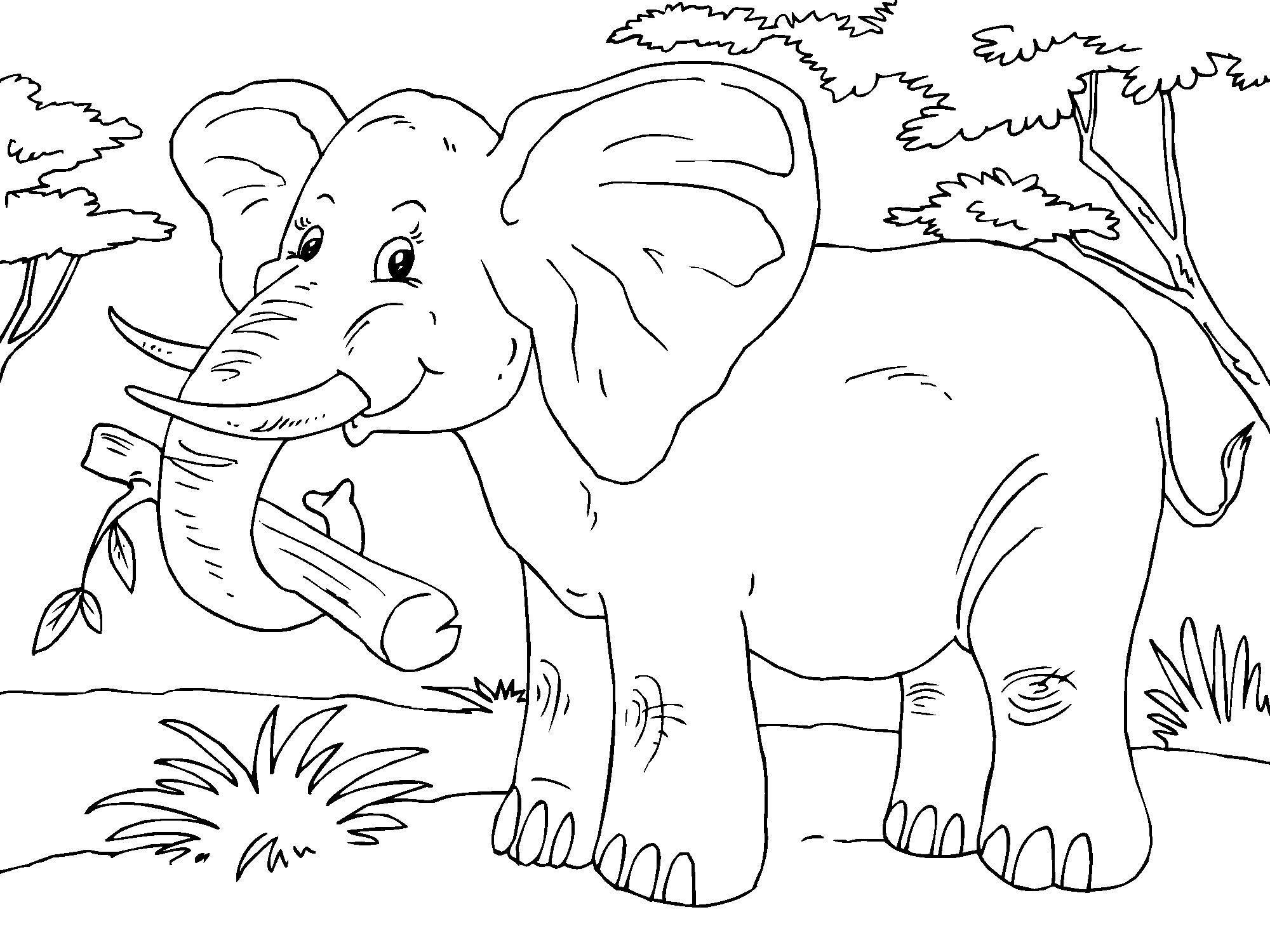 Dibujo para colorear elefante - Img 23015