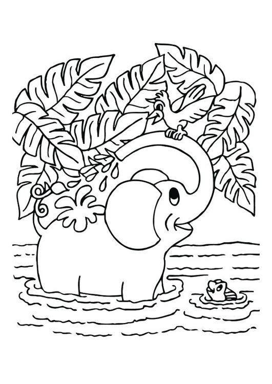Dibujo Para Colorear Elefante Img 12543