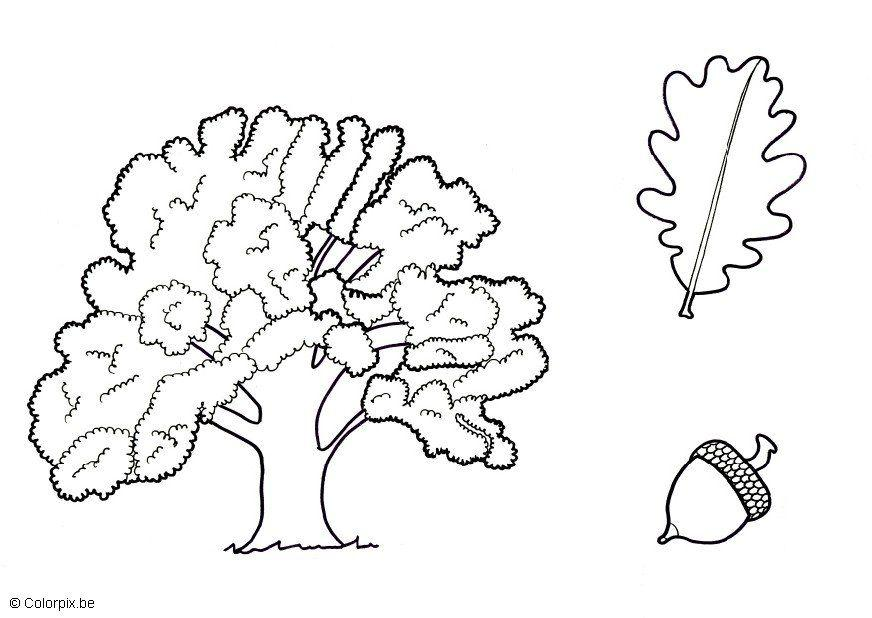 Oak Tree Coloring Page