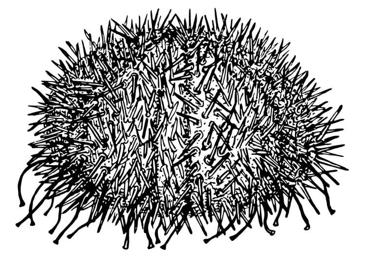 Dibujo para colorear erizo de mar - Img 30114