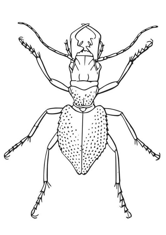 Dibujo para colorear Escarabajo - Img 16432
