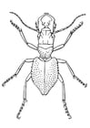 Dibujo para colorear Escarabajo
