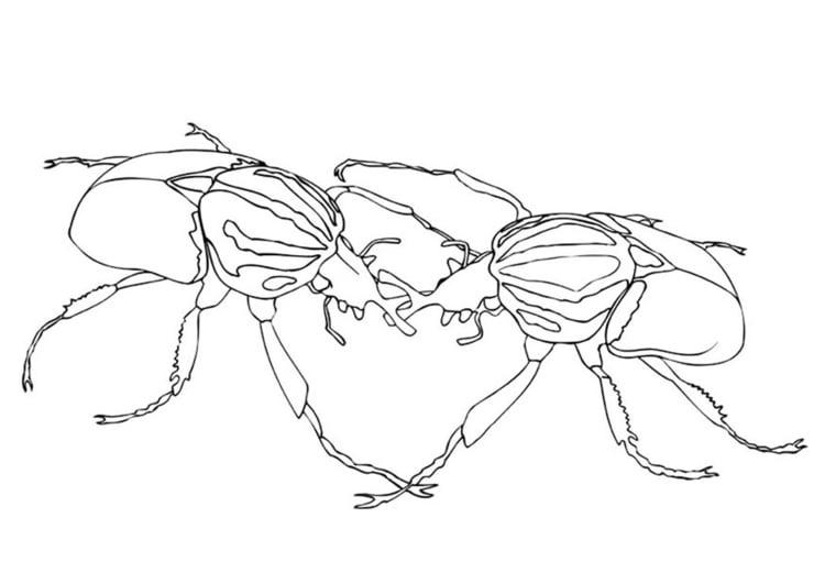 Dibujo para colorear Escarabajos luchando - Img 9462