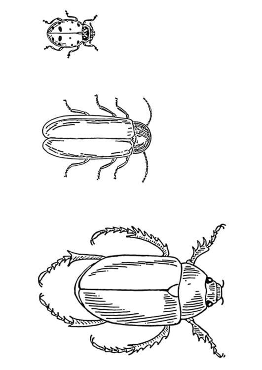 Dibujo para colorear Escarabajos - Img 13267