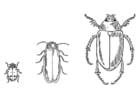 Dibujo para colorear Escarabajos