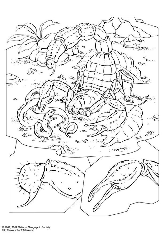 Dibujo Para Colorear Escorpión Img 3979