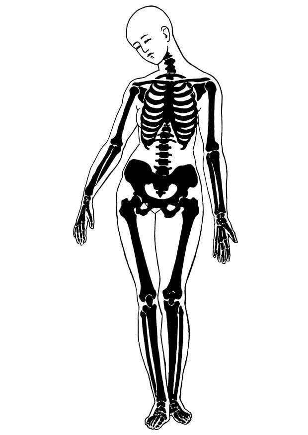 Dibujo para colorear esqueleto - Img 18677