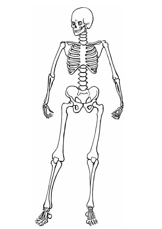 Dibujo para colorear Esqueleto - Img 8910